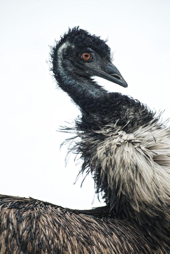 Emu - niezwykły portret zwierząt ZOO. Magda Głogowska Portrecistka Zwierząt fotograf. Projekt Bilet roczny.