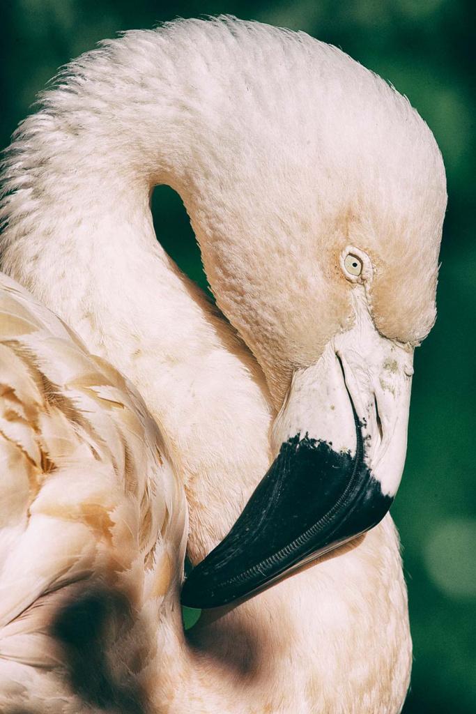 Flaming różowy - niezwykły portret zwierząt ZOO. Magda Głogowska Portrecistka Zwierząt fotograf. Projekt Bilet roczny