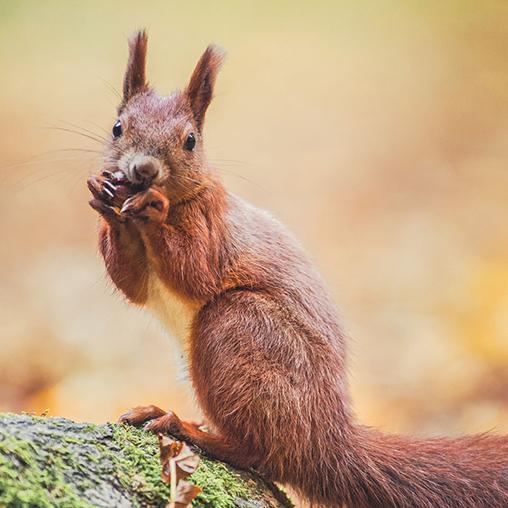 Jak fotografować wiewiórki?