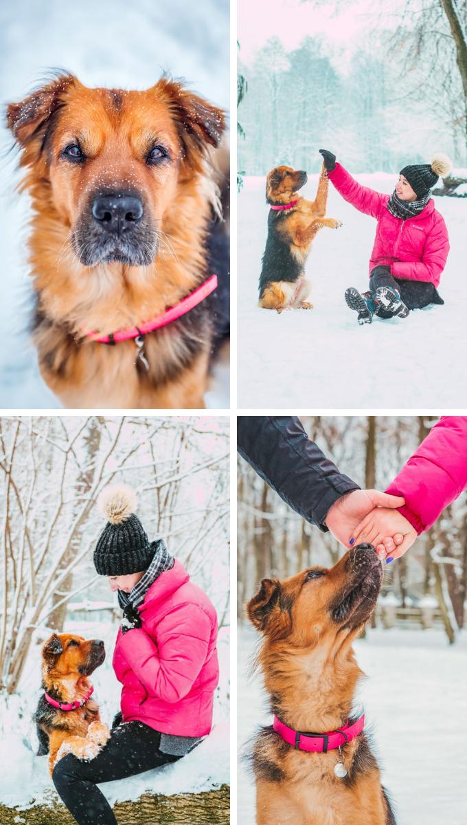 Sesja zdjęciowa dla psa. Psi fotograf Magda Głogowska opinie
