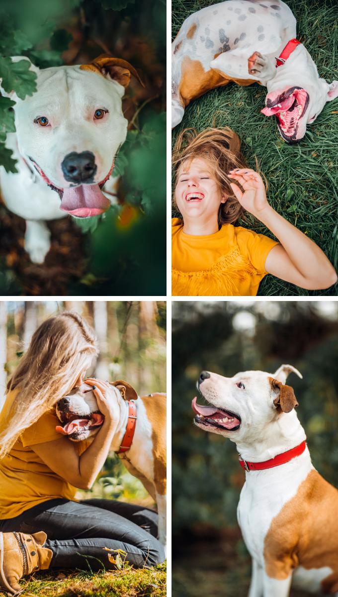Sesje zdjęciowe dla psów. Magda Głogowska Portrecistka Zwierząt opinie