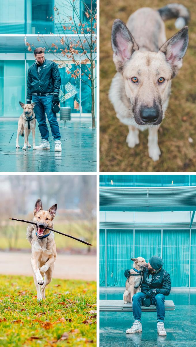Psi fotograf Warszawa - sesje zdęciowe dla psów